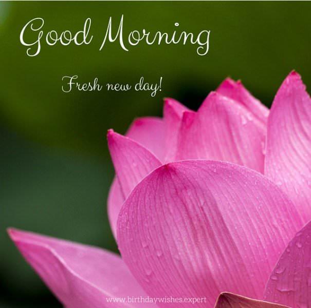 Good Morning. Fresh new day!