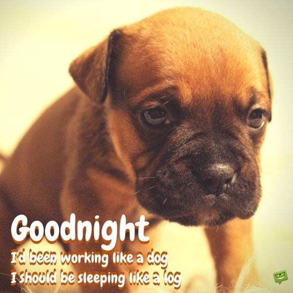 Good night. I'd been working like a dog. I should be sleeping like a log.