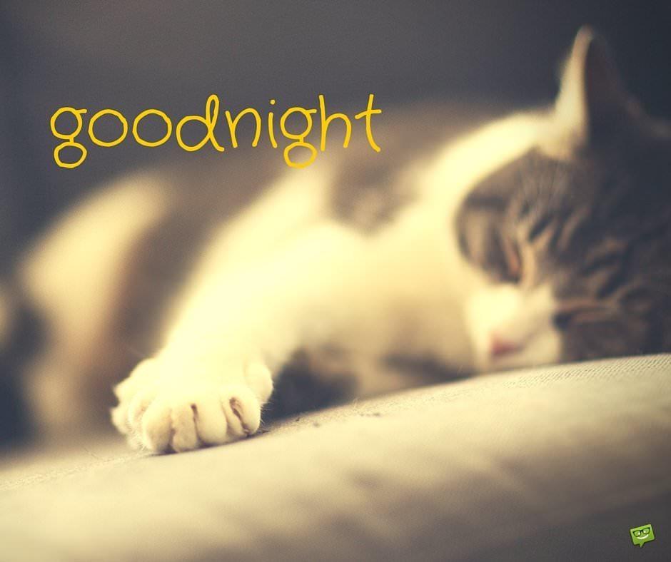 Good night.