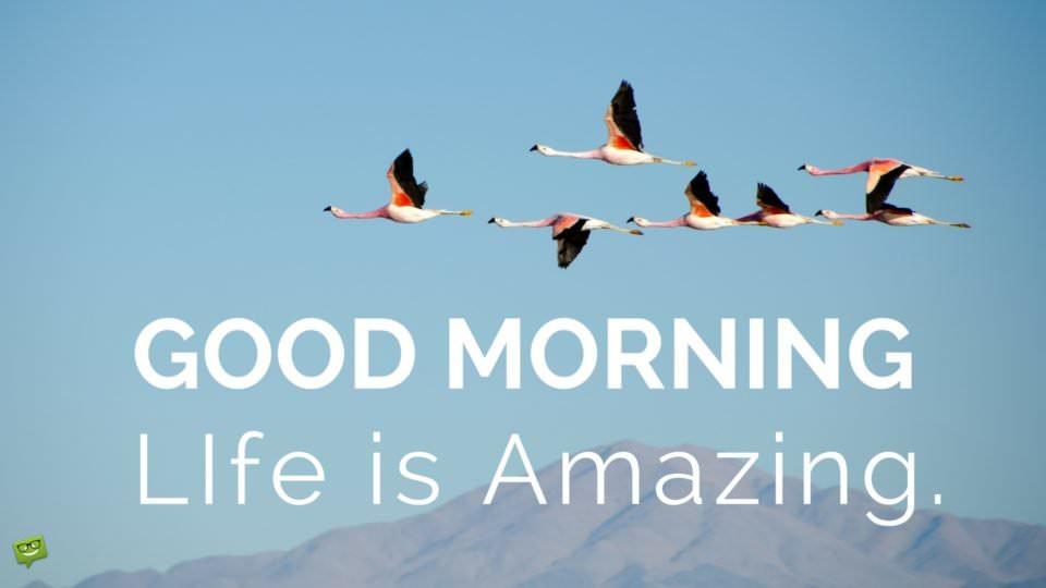Good Morning, life is amazing.